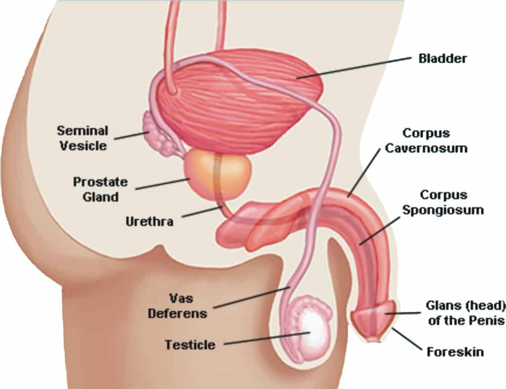 Get Erectile Dysfunction Treatment In Houston Mens Health Houston